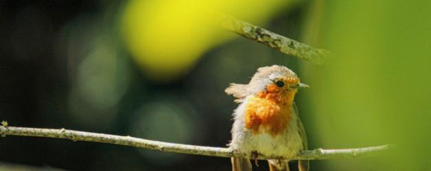 Afleiding in coronatijd: doe mee met de tuinvogeltelling! 21.01